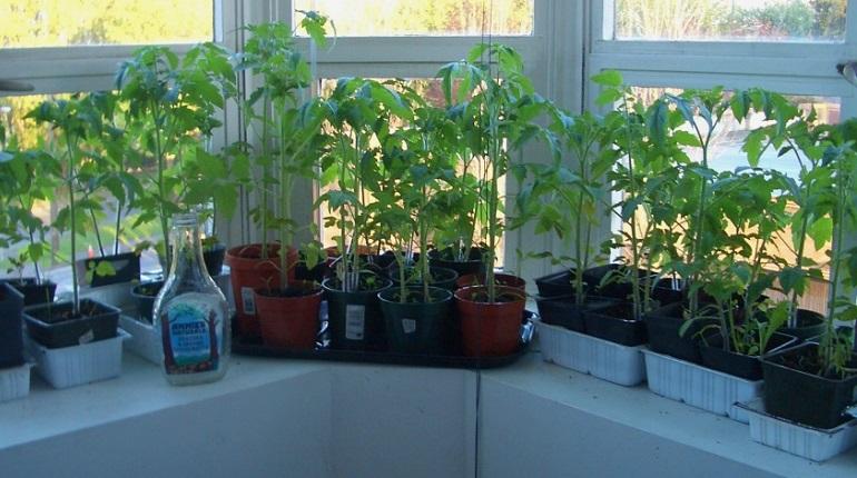 выращивание растений дома