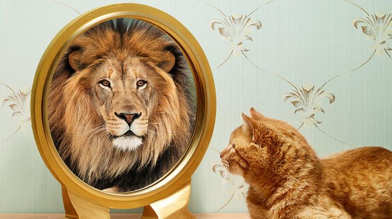 кот смотрит в зеркало и видит льва