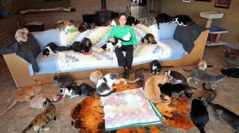 коты в квартире, девушка и много котов на диване