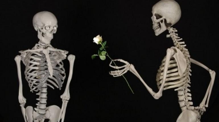 скелет дарит розу другому скелету