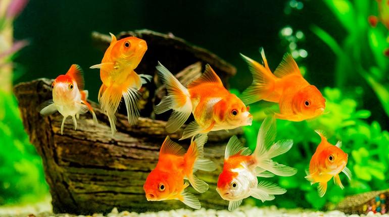 аквариумные рыбки, рыбки в аквариуме