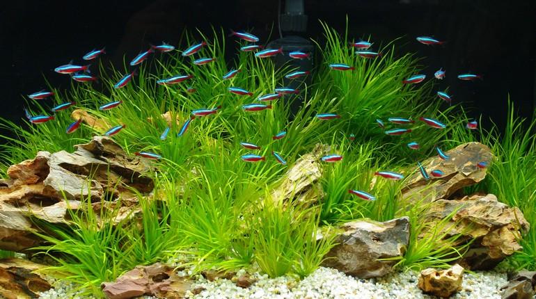 рыбки плавают в аквариуме, аквариум с рыбками