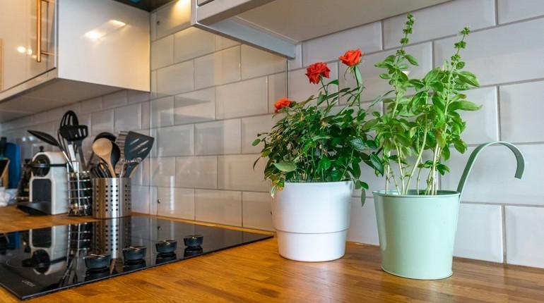 цветы в интерьере, чистота в доме, цветы на столе, красивая квартира