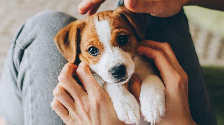 щеночек, собачка, миленький щенок в руках