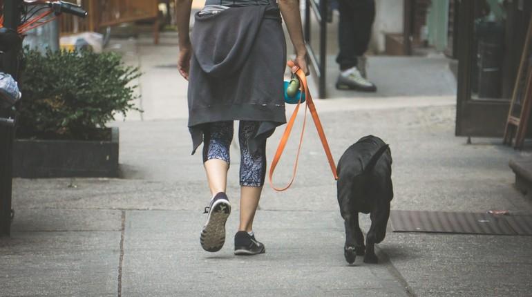девушка на прогулке с собакой, выгул собаки