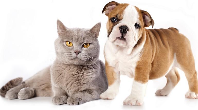кот и собака, собака дружит с котом, домашние питомцы