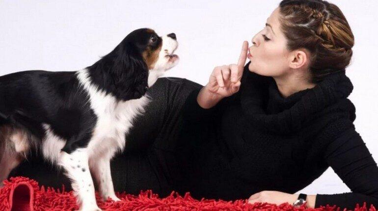 собака лает на девушку, девушка и собака