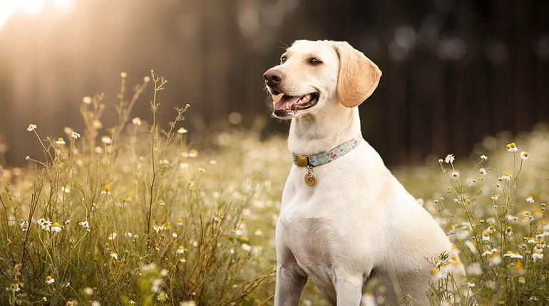 собака на лугу, летняя прогулка собаки