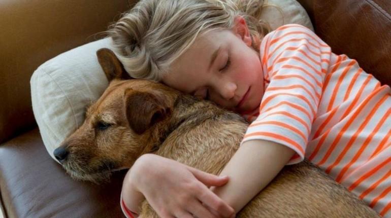 девочка обнимает свою собаку, ребенок спит со своей собакой
