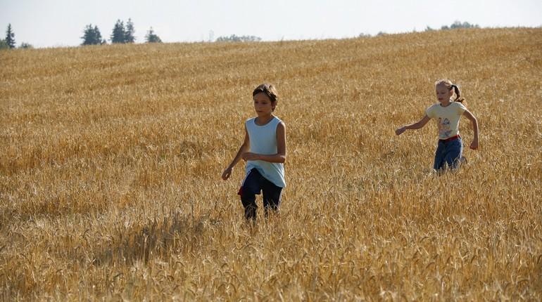 дети бегают по пшеничному полю, пшеничное поле летом и дети