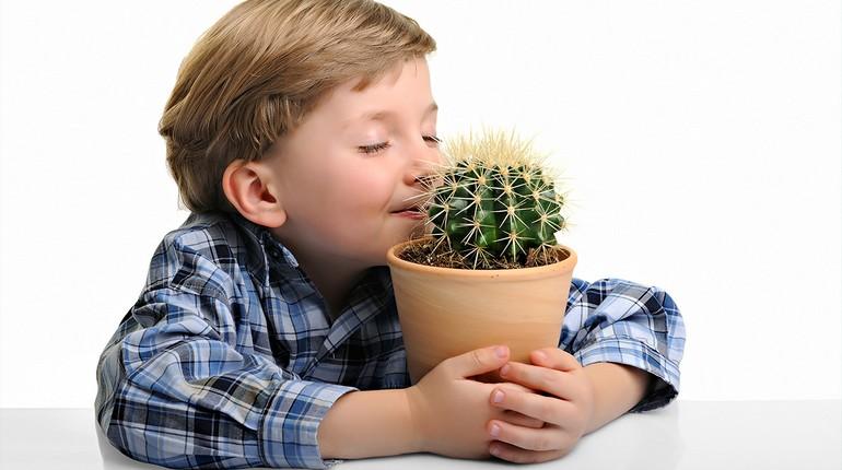 мальчик нюхает кактус, ребенок обнимает горшок с кактусом
