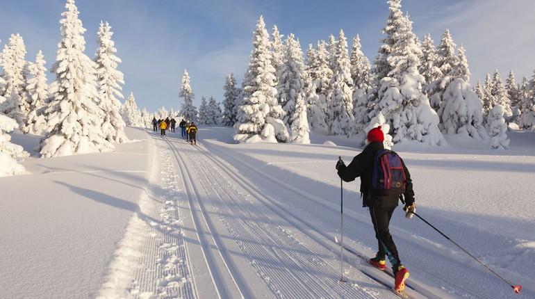 лыжная пробежка среди заснеженных елей, лыжня в лесу и лыжники