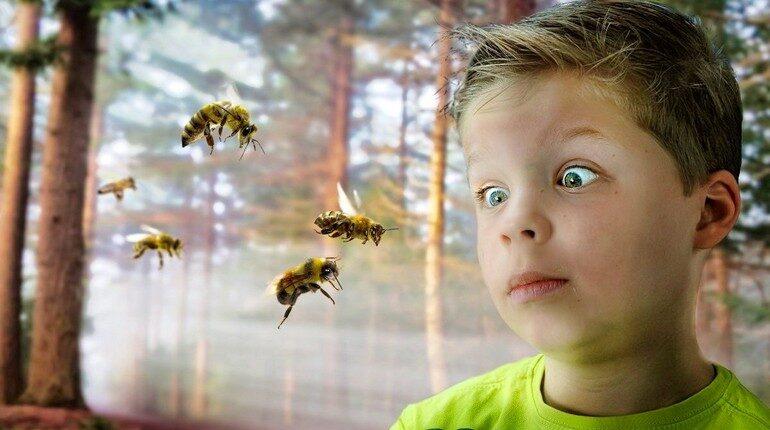 мальчик с ужасом смотрит на насекомых, ребенок боится насекомых